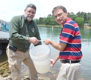 DNR freshwater fisheries chief Ross Self, left, and state Rep. Davey Hiott of Pickens get ready to put the first bucket of striped bass fingerlings into Lake Hartwell.